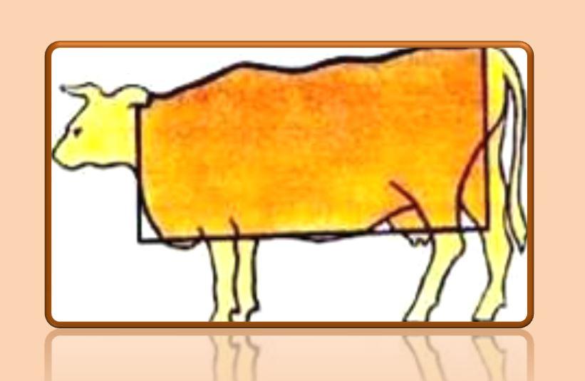myasnye-porody-korov117