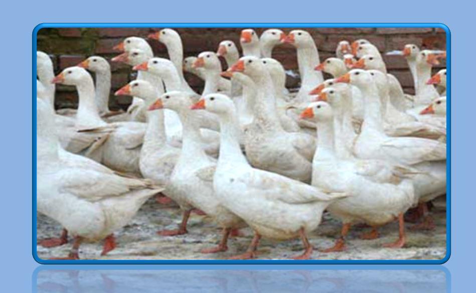 итальянские гуси