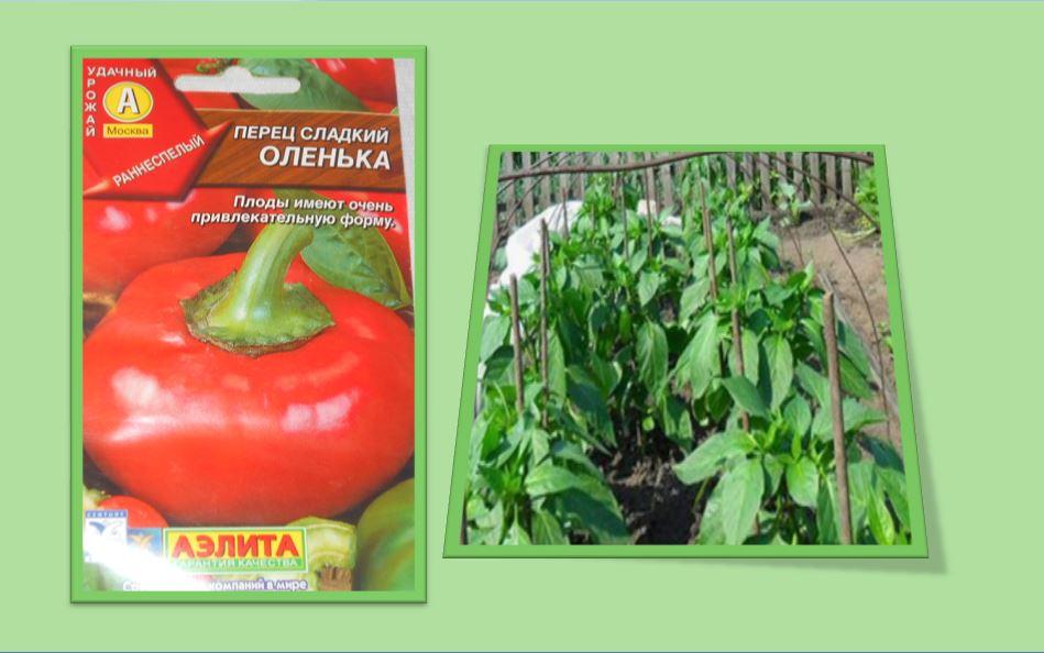 томатная форма плодов перца