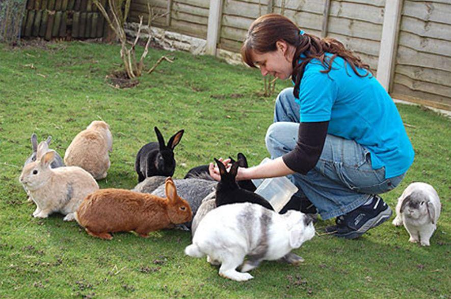 кролиководство - отличный вариант для детей