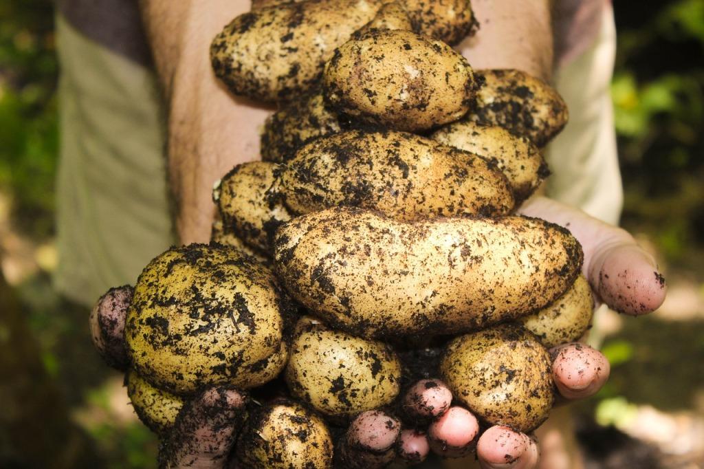 невская картошка
