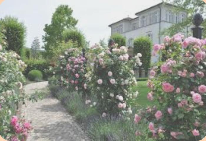 розы у дома